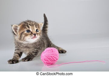 little kitten playing with a woolball - Little kitten...