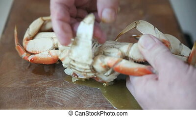 preparing crab - a man breaks up a cooked Dungeness crab and...