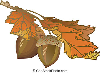 Acorn - Fall oak acorn, vector illustration