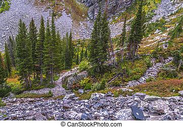 Paintbrush Canyon trail - Paintbrush Canyon Trail near Holly...