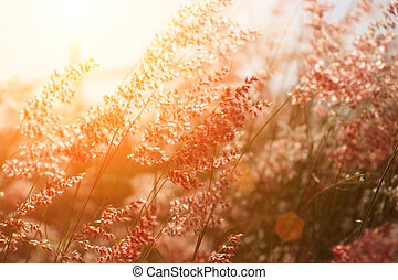 Flower grass impact sunlight