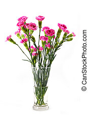 fresh mini carnations flower on white background