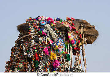 Camel dressed up for the trade fair. Pushkar, India - Camel...