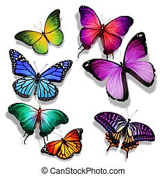 Many different butterflies flying, isolated on white...
