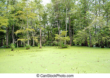 Swamp Bayou Louisiana - A Louisiana Swamp