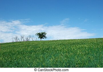 Lone Tree - A lone tree against a blue sky and green grass
