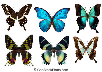 Many different beautiful butterflies on white background