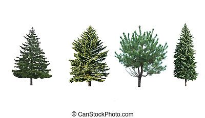 four pine trees is isolated on a white background