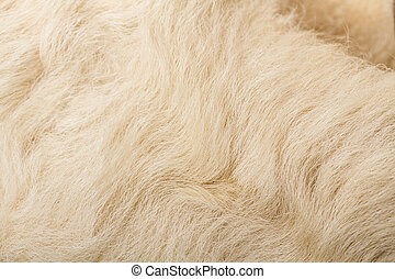 wool sheep closeup - nature woolly sheep fleece background