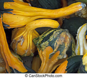 Gourds - A collection of recently harvested colorful gourds