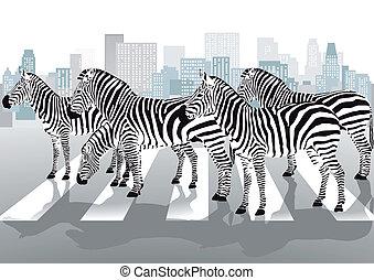 Zebras, peão, cruzamento