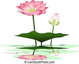 Lotus - Water lily vector illustration