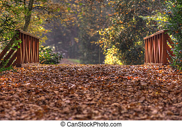 Autumn in forest - Colourful park with brideg in fall