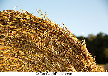 Hay bale on a harvested field in Germany.
