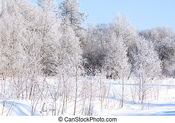 Christmas morning Snowy winter forest and meadow
