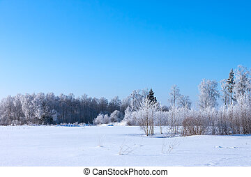 Christmas morning. Snowy winter forest and meadow.