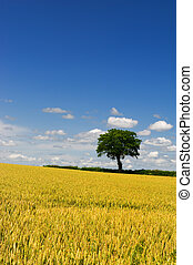 Wheat fields with tree at the horizon