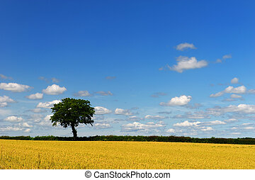 Wheat fields with tree - Wheat fields with spur and tree at...