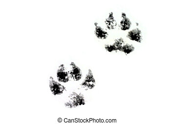Wild footprints - Canon 300D