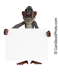 Baboon with a blank sign