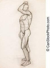 human body anatomy study
