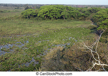Pantanal wetlands and marsh in Brazil