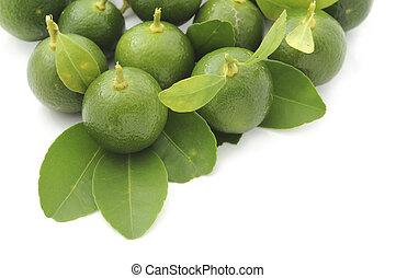 kalamansi fruit in white background - kalamansi can use to...