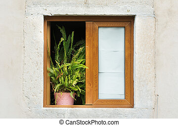Wooden framed window with potted plant - Potted plant...
