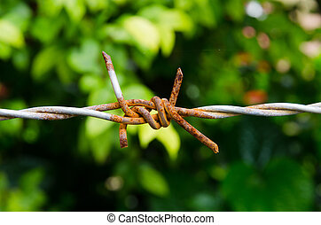 barbed wire - Rusty barbed wire single line