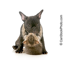 puppy love - kitten with arms wrapped around french bulldog...