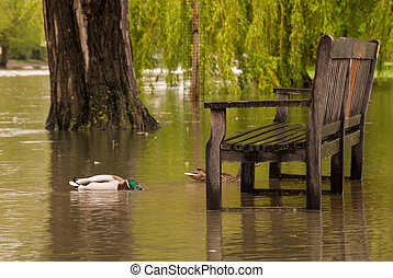 Flooded Riverside Picnic Bench - Duck swimming around a...