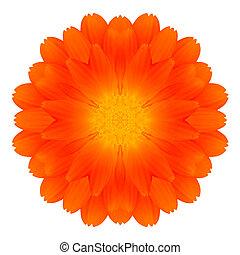 Orange Marigold Mandala Flower Kaleidoscope Isolated on...