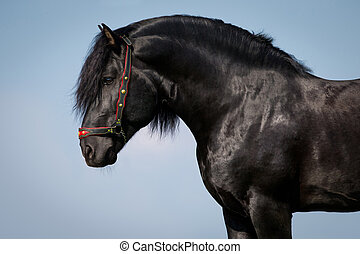 Black horse portrait on blue sky - Black horse portrait on...
