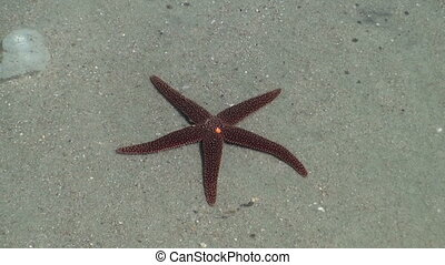 Starfish in a tide pool