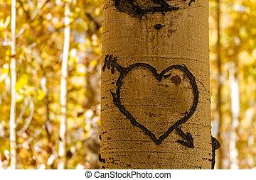 Aspen Tree Hearts - Aspen tree trunk standing in aspen...