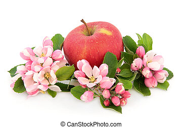 An Apple a Day - Red apple with flower blossom over white...