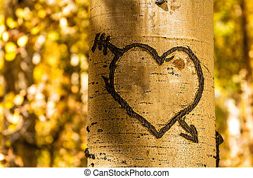 Aspen Tree Hearts - Light glowing on carved heart in Aspen...