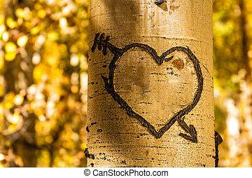 Aspen Tree Hearts - Light glowing on carved heart in Aspen...