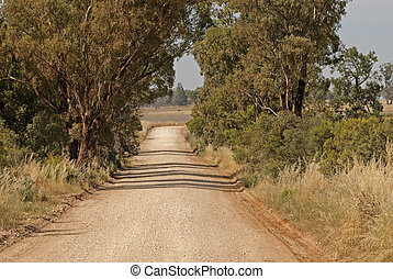transport - a country dirt road between eucalyptus trees and...