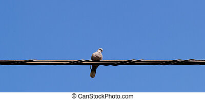 pigeons sitting on wire
