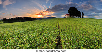 Sunset over farm field with lone tree and chapel