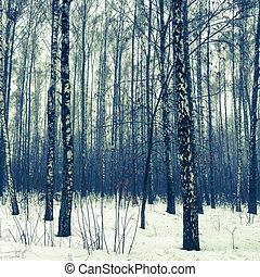 Birch forest in snow winter - Birch forest in winter covered...