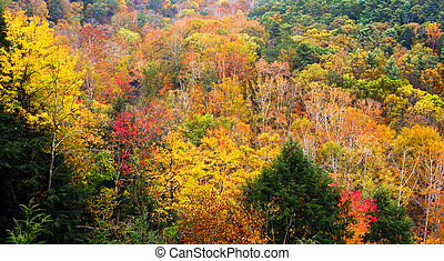 Mohican Autumn - Colorful foliage blazes with color on an...