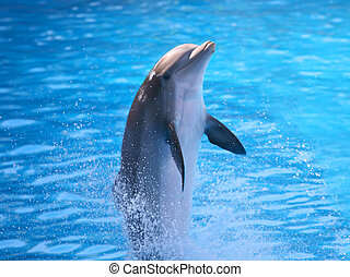 Dolphin - A digital image of a dolphin dancing in the water