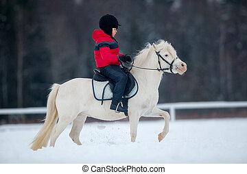 Pony and boy - riding horseback - Boy riding white pony in...