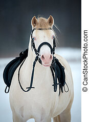 Horse with saddle and bridle - Welsh sport pony with saddle...