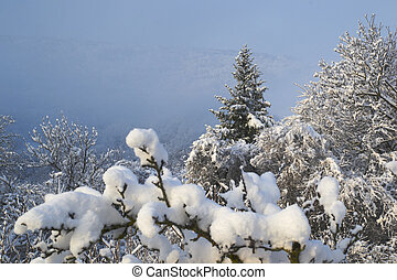 Fresh snow covering trees and branches on a winter morning