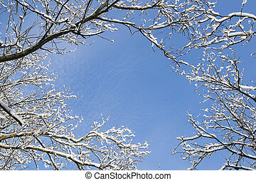 Winter frame - Bare winter branches covered with fresh snow...