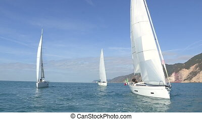 Sailing boats with open sails - Sailing boats navigating...