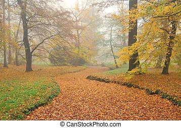 Forest park and dry rivulet bed with fallen leaves in misty...